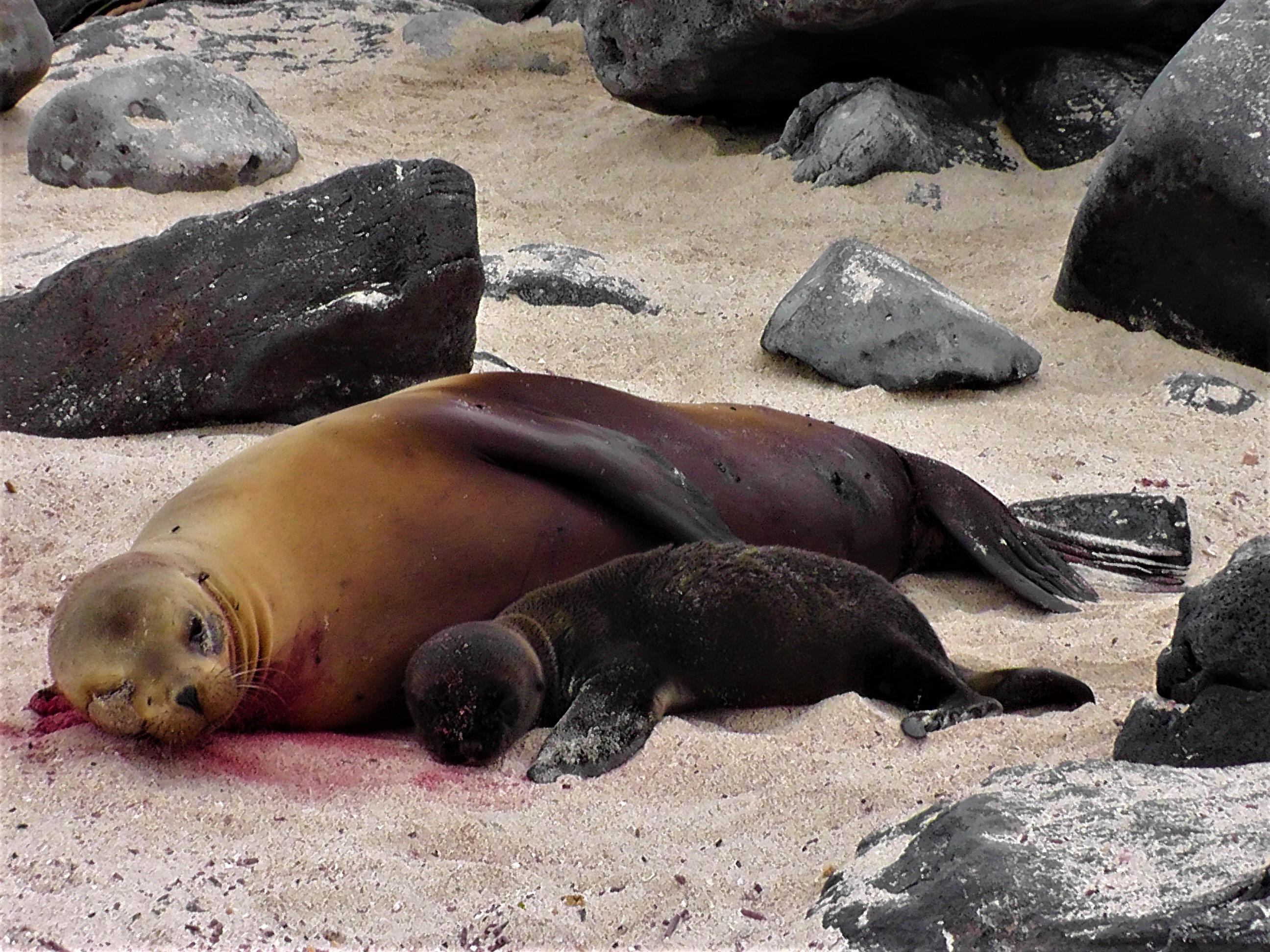 Mother and Baby Sea Lions Sleeping