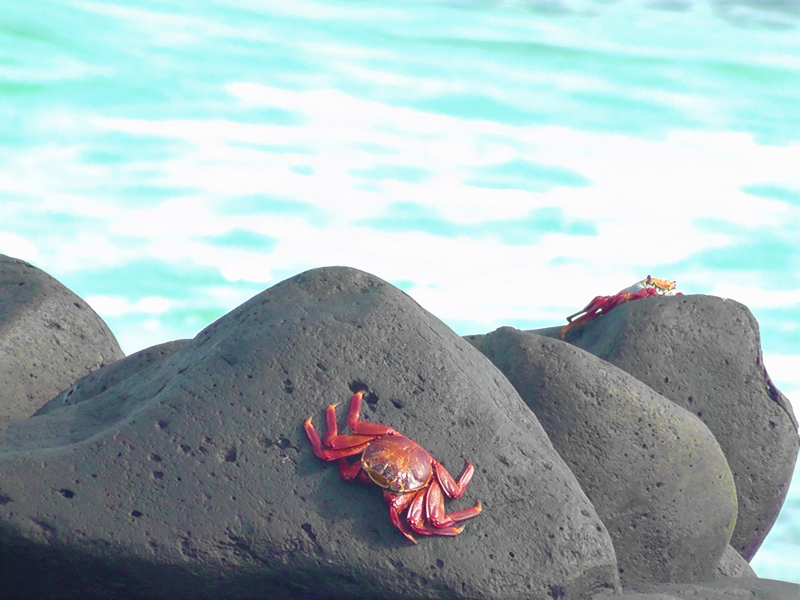 Red Crab Blue Water
