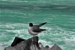 Bird on Rocks Against Blue Ocean